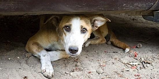 perro abandonado. Avaaz