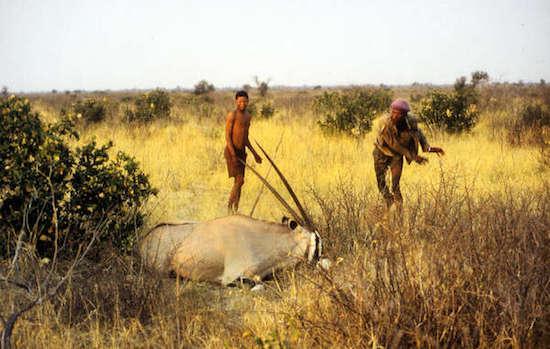 Los bosquimanos han cazado animales de forma sostenible durante muchas generaciones y no suponen una amenaza para la supervivencia de la vida salvaje en la Reserva de Caza del Kalahari Central. © Philippe Clotuche/Survival