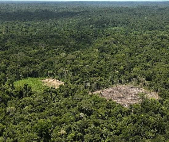 Deforestación en la Amazonia peruana
