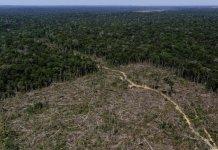 Brasil: deforestación en la Amazonia