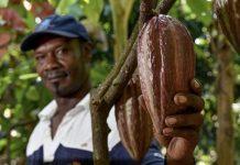 FAO cultivos tradicionales