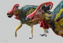 MX dinosaurios Tlatolophus © Luis V. Rey