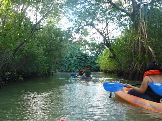 República Dominicana: ruta fluvial por los manglares