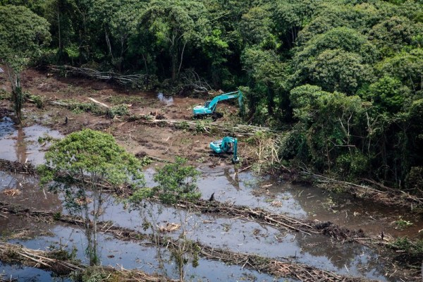 Excavadoras limpian bosques de turberas intactas y construyen canales de drenaje en una concesión de palma aceitera propiedad de PT Andalan Sukses Makmur, una subsidiaria de Bumitama Agri Ltd. La concesión, junto al Parque Nacional Tanjung Puting en el distrito de Kumai, Kalimantan Central, es hábitat de numerosas especies en peligro de extinción incluyendo orangutanes y monos probóscide, así como ramin. El análisis cartográfico de Greenpeace y las investigaciones de campo revelan un desarrollo a gran escala en la concesión entre febrero y octubre de 2013, incluida la eliminación de bosques intactos de turberas dentro de las zonas de amortiguamiento identificadas en la evaluación de AVC para la concesión. Kalimantan Central, Indonesia. 13 de noviembre de 2013  © Kemal Jufri / Greenpeace