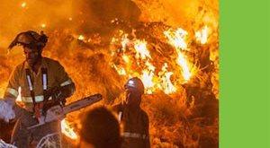 Incendios forestales: Greenpeace pide que se asuman responsabilidades
