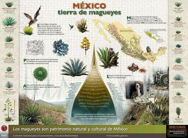México Tierra de Magueyes