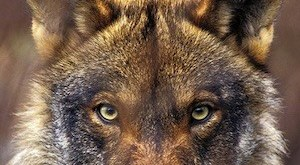 """Cartel de la campaña de WWF """"Marca el territorio por el lobo"""""""