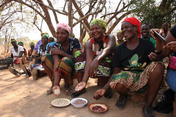 Tres agricultoras muestran orgullosas parte de su cosecha en una aldea vecina de la capital de Zambia. Las legumbres son buenas para la nutrición y como fuente de ingresos, en particular para las mujeres, responsables de la seguridad alimentaria de los hogares. Crédito: Busani Bafana/IPS