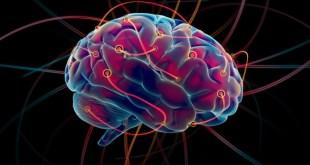 ¿Ha madurado su cerebro?