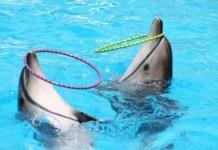 Delfines en cautividad. Foto: sosdelfines-org