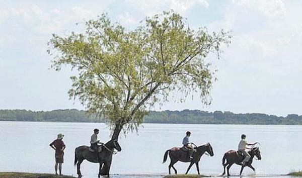 Ejercicios-de-Memoria-Paz-Encina-caballos