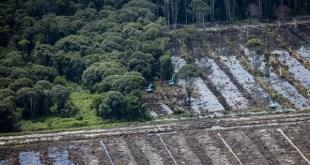 Aceite de palma: Europa lo identifica con deforestación