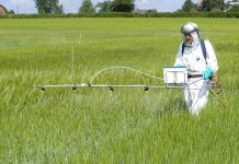 Pesticidas-glifosato