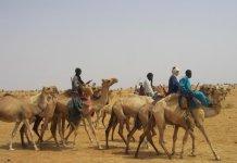 Refugiados tuareg van en camello al desierto de Initkan (Niger), donde reciben ayuda de ACNUR, Abril 2013. © ACNUR / Bernard Ntwari