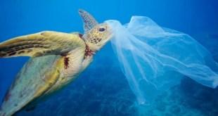 #SalvarLosOceanos: la FAO aporta siete razones