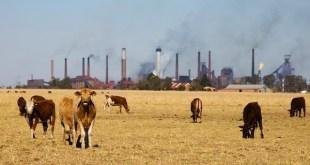 Carne roja y procesada: excesos peligrosos