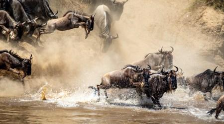 12 day safari vacation TANZANIA Great Migration Crossing, Wildlife & Cultural Immersion (6)