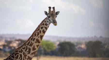 Wildlife & Cultural Immersion Safari book your dream trip (2)