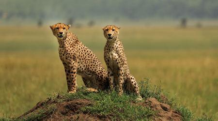 Wildlife & Cultural Immersion Safari book your dream trip (8)