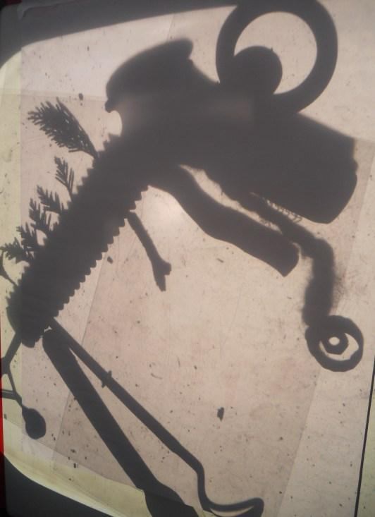 shadow dino