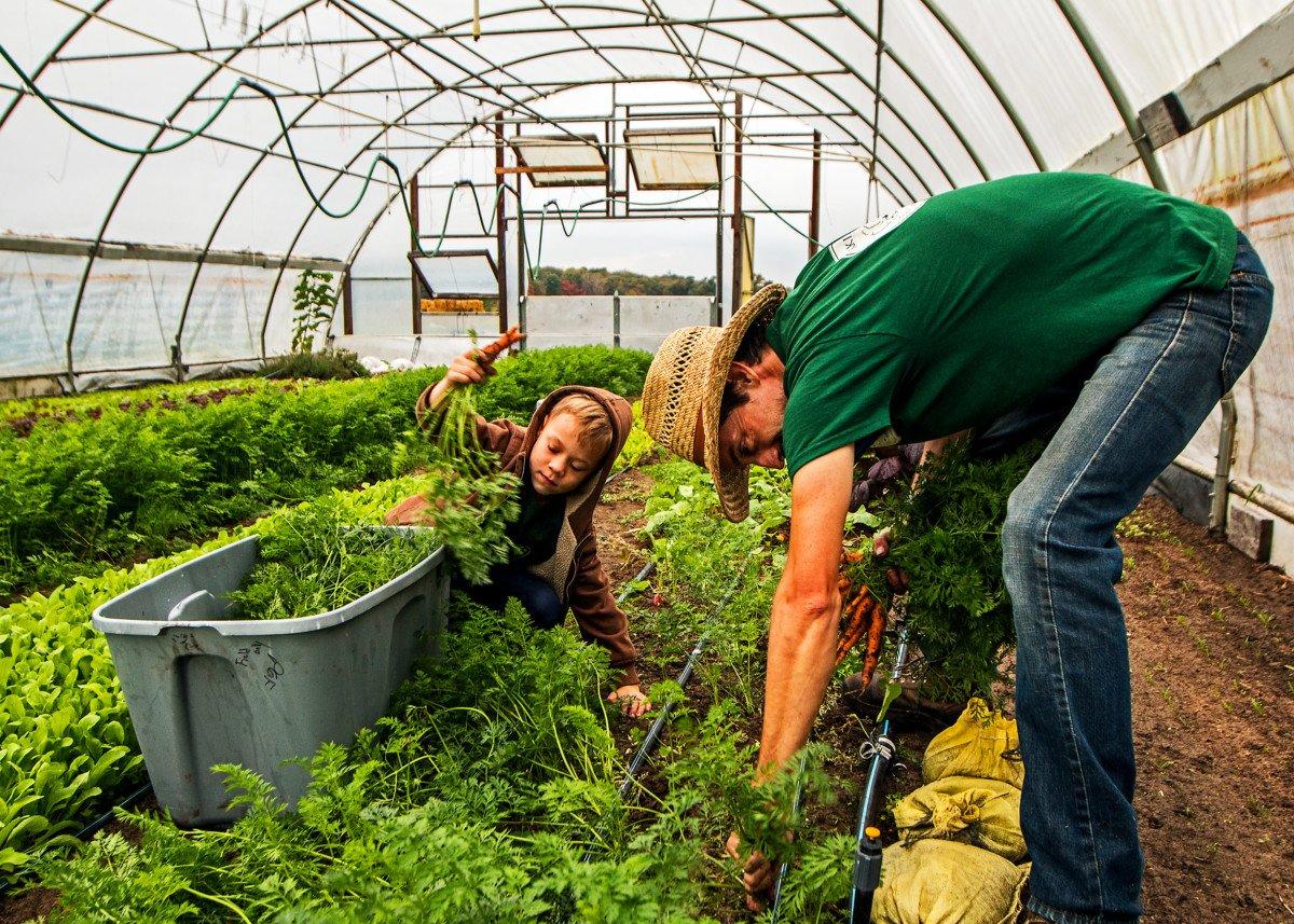 Dan and Harper harvesting carrots