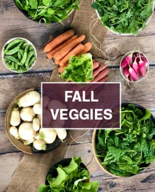 fall veggies in CSA share