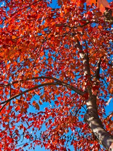 Orange Red against blue, Gaithersburg, Maryland