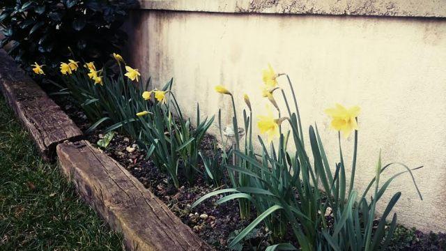 Im Garten ist auch schon Frühlingsstimmung angesagt.