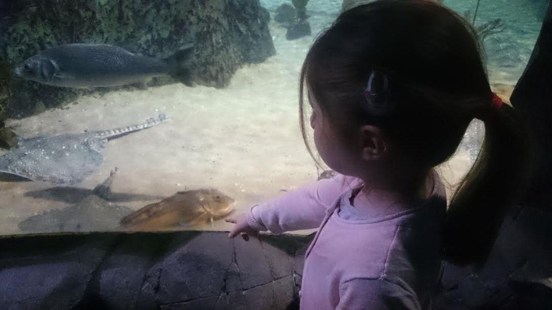 perle-im-sealife