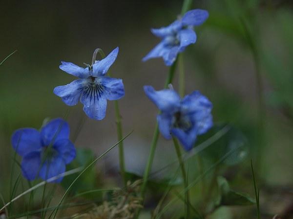blommor_090512
