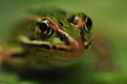 Przestrzenny chór zielonych żabek :)