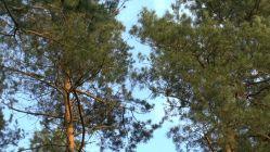Las i cudowny śpiew ptaków…