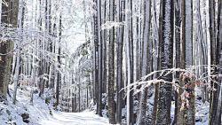 Wiosenny las i topniejący śnieg…