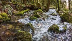 Szemrzący strumień na Cougar Mountain