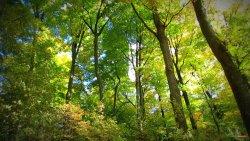 Odpoczynek w środku liściastego lasu:)