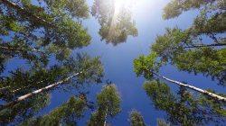 Dużo błękitnego nieba :)
