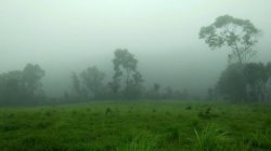 Orkiestra w miękkiej mgle…