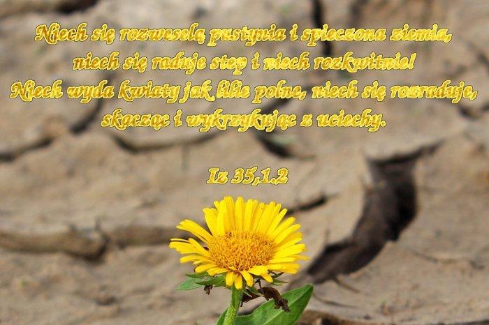 Osiągną radość i szczęście, ustąpi smutek i wzdychanie
