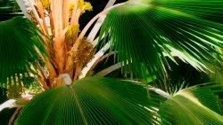 Coś dla tych co nigdy nie wspinali się na palmę…
