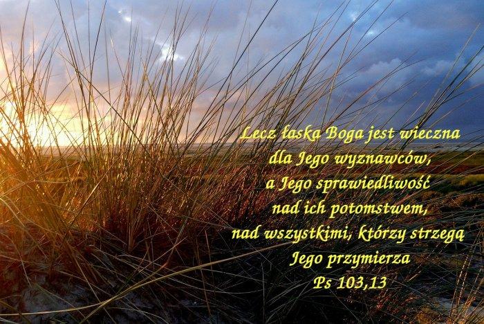 Dni człowieka są jak trawa, kwitnie jak kwiat na polu.