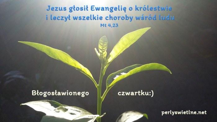 Jezus głosił Ewangelię o królestwie i leczył wszelkie choroby wśród ludzi