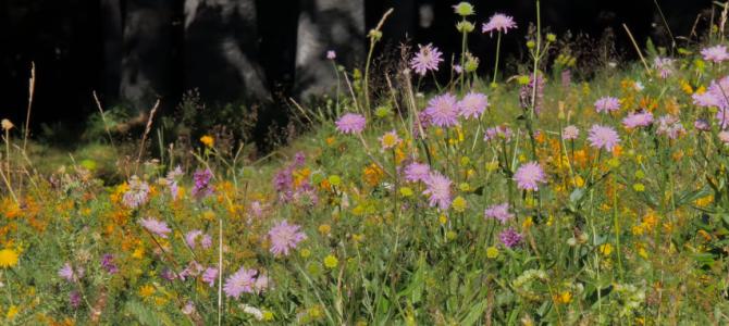 Radość kwiatów łąki:)