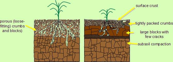 Terreno non compatto (a sinistra) e terreno compatto (a destra)