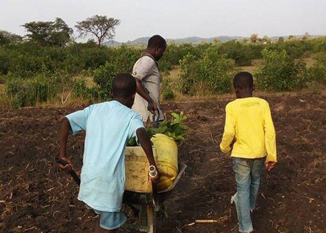 orfani permacultura kenya