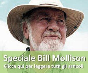 Speciale Bill Mollison