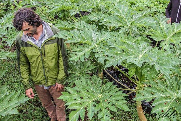 Gautier Gras corsi permacultura