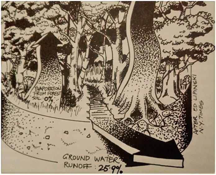albero permacultura bill mollison