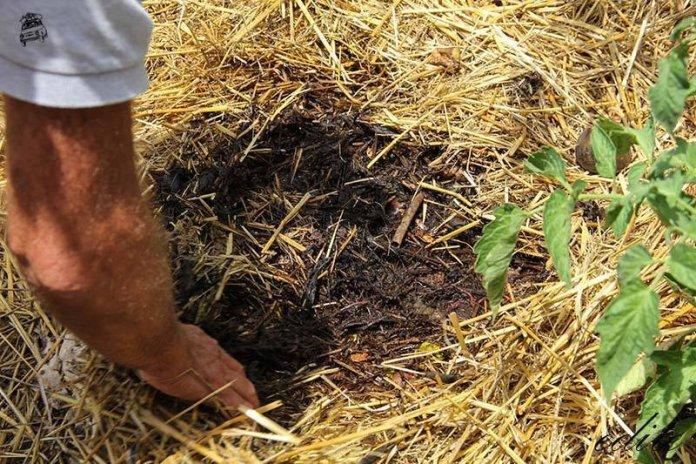 rigenerazione suolo