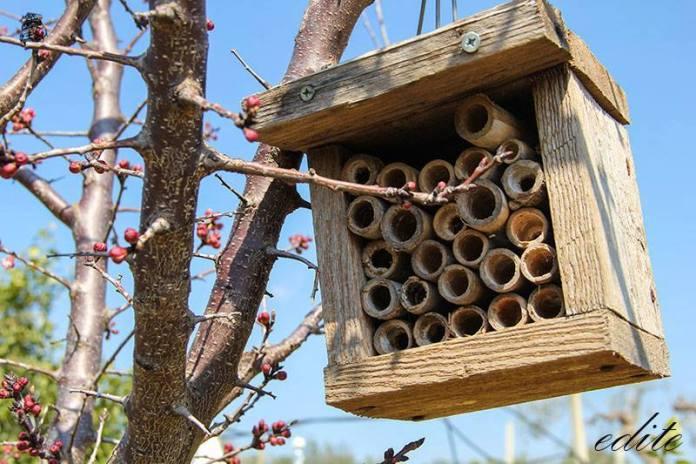 hotel insetti sicilia permacultura