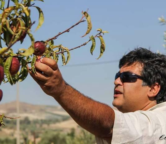 Mario carbone permacultura sicilia